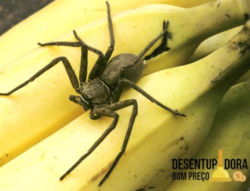 Controle de pragas urbanas ensina a evitar acidentes com aranhas