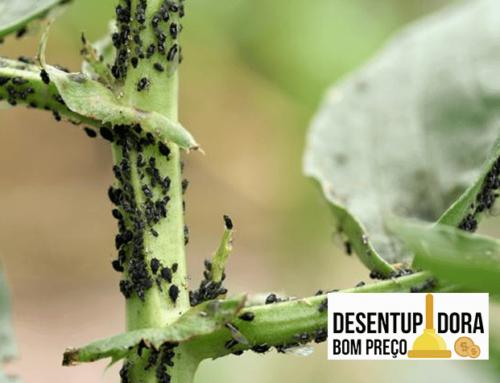 Proteja seu jardim através de controle de pragas Porto Alegre